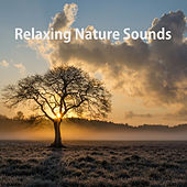 Relaxing Nature Sounds by Nature Sounds (1)