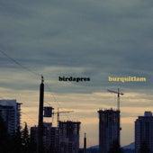Burquitlam by Birdapres