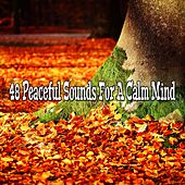 48 Peaceful Sounds For A Calm Mind von Massage Therapy Music