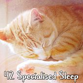 42 Specialised Sleep de Lullaby Land