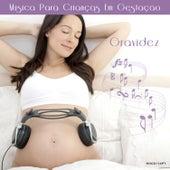 Gravidez ♫ Música para Crianças Em Gestação de Various Artists