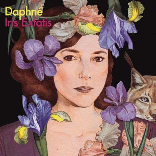 Iris Extatis de Daphné