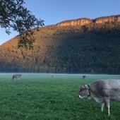 Memories of Swiss Summer (Dreamy Winter Variation) von Dilettant