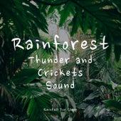 Rainforest, Thunder and Crickets Sound (Sleep Aid) by Rainfall For Sleep