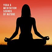 Yoga & Meditation Sounds of Nature de Nature Sound Collection