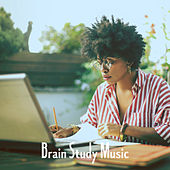 Brain Study Music by Various Artists