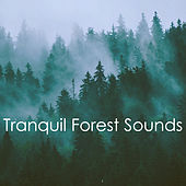Tranquil Forest Sounds by Various Artists