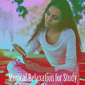 Musical Relaxation for Study de Various Artists