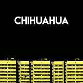 Chihuahua by CDM Project