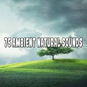 75 Ambient Natural Sounds von Lullabies for Deep Meditation