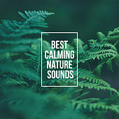 Best Calming Nature Sounds – Relax Your Body & Mind with Nature New Age Music by Nature Sounds (1)