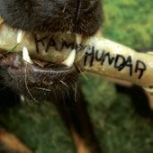 Kamphundar by Kamphundar
