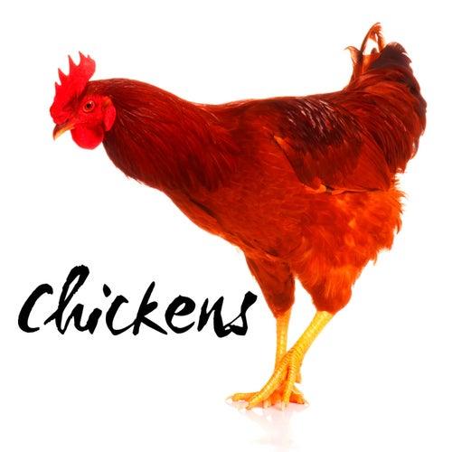 Chickens von The Hunt Saboteurs