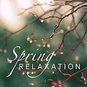 Spring Relaxation von Various Artists