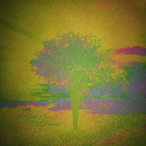 Tell the Wind by Robin Borneman
