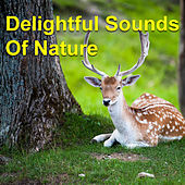 Delightful Sounds Of Nature by Various Artists