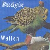 Budgie de Einar Wallen Mjåland