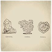 Crystal, Coral, Fossil: A Collection by Psalm Trees