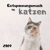 Entspannungsmusik für Katzen 2019 - Extrem Beruhigende Klänge für ihre Kätzchen von Entspannungsmusik