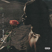 Roses by Arin Ray