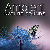 Ambient Nature Sounds - Close the Nature Music, Nature Sound Collection de Sounds Of Nature