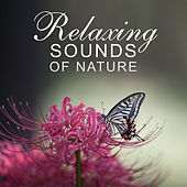 Relaxing Sounds of Nature – Water Sounds for Deep Sleep, Relaxation, Healing Meditation de Nature Sounds Artists
