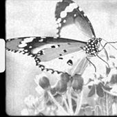 The Year Of The Butterfly de TheDJA
