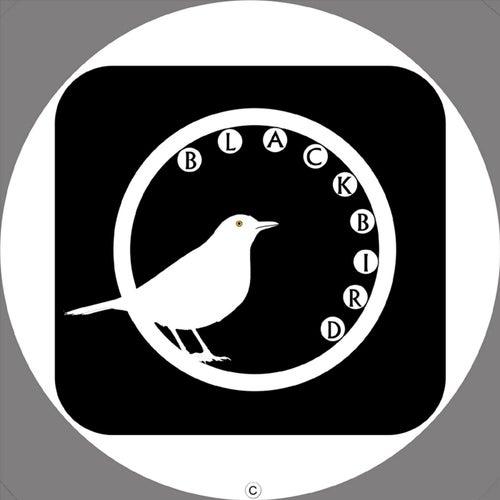Blackbird von Steve Lighton