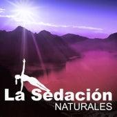 La Sedación Naturales - Silencio Interno, Mente Pura, Energía de la Tierra, lluvias de Meditación Música Ambiente