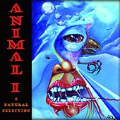 A Natural Selection (Live) von Animali