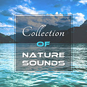 Collection of Nature Sounds – Forest Music, Relaxing Sounds, Soft Relaxation de Nature Sounds Artists