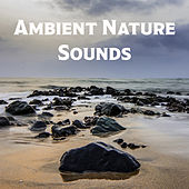Ambient Nature Sounds – Peaceful New Age Music for Deep Relaxation, Water Sounds, Time for You, Easy Listening de Sounds Of Nature