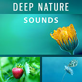 Deep Nature Sounds – Music for Relax Your Body & Mind, Ambient Serenity, Inner Peace, Balance of Nature de Nature Sounds Artists
