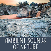 Ambient Sounds of Nature – Gentle Music, Natural Ambience, Soft Nature Instrumental, Calm Down de Nature Sounds Artists