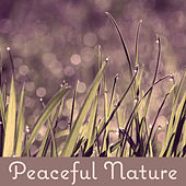 Peaceful Nature - All Best, Quiet Sounds, Summer Music, Touch of Sand, Imagine Holidays von Soothing Sounds