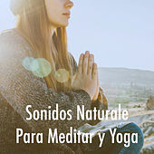 Sonidos Naturale Para Meditar y Yoga by Various Artists