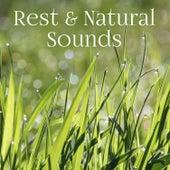 Rest & Natural Sounds – Relaxation Melodies, Anti Stress Music, Spiritual Healing, Deep Meditation de Sounds Of Nature