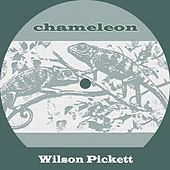 Chameleon by Wilson Pickett