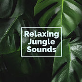 Relaxing Jungle Sounds by Nature Sounds (1)
