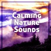 Calming Nature Sounds – Relaxing Music to Calm Down, Stress Relief, Meditation Calmness, Spirit Journey de Sounds Of Nature