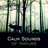 Calm Sounds of Nature – Relaxing New Age, Soft Music to Calm Down, Nature Relaxation, Healing Water de Nature Sound Collection