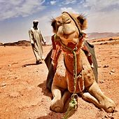 Bedouin Boogie by Craig Campbell
