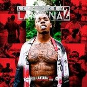 Live from Lantana 2 by Lantana