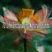 72 Life Encouraging Natural Sounds de Meditación Música Ambiente