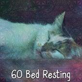 60 Bed Resting de Sleepicious
