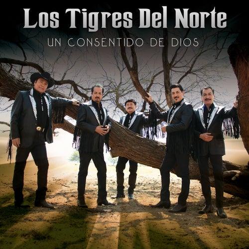 Un Consentido De Dios by Los Tigres del Norte