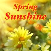 Spring Sunshine di Various Artists