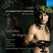 Bach: Celebration Cantatas - Blast Lärmen ihr Feinde, BWV 205a / Entfliehet ihr Sorgen, BWV 249a (Schäferkantate) de Various Artists