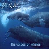 The Voices of Whales de E.V.A.