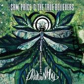 Dragonfly by Sam Price